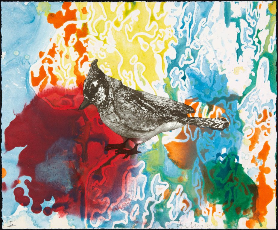 Anne Chu: Blue Jay Monotypes product image